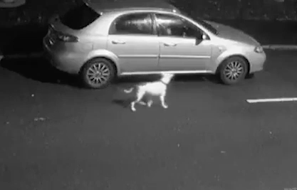 Dog jumps up at car as owner abandons it
