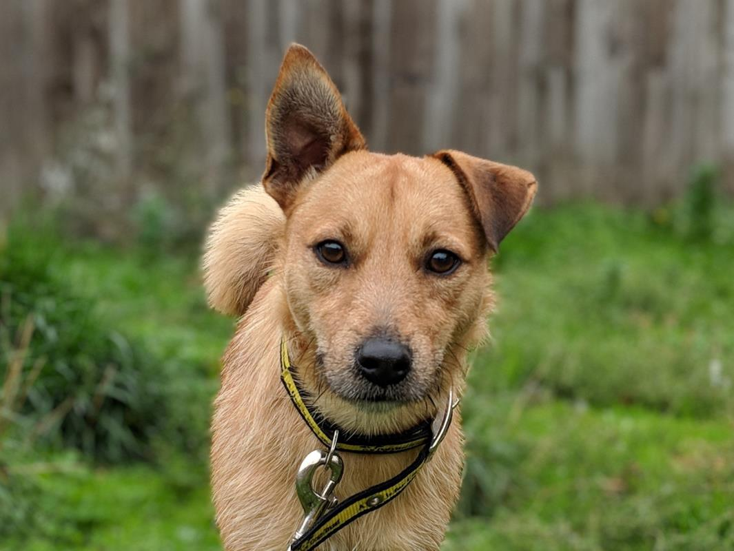 Dogs Trust adoptable dog