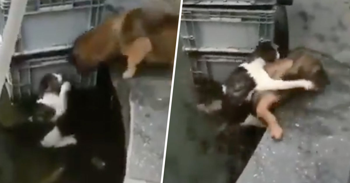 dog rescues cat