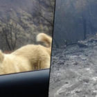Dog Found Waiting At Burned Down House A Month After Surviving California Fires