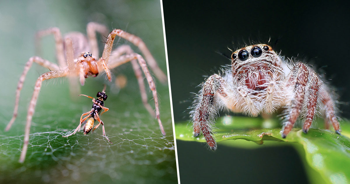 If Spiders Worked Together They Could 'Eat All Humans' In One Year