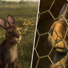 Watership Down Producer Has Warned Parents New Adaptation Is Not For Kids