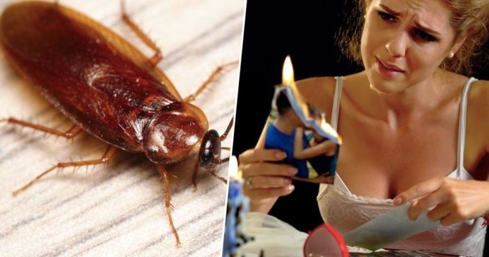 You can name a cockroach after your ex.