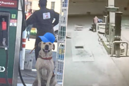 Adopted stray dog comes to the rescue.