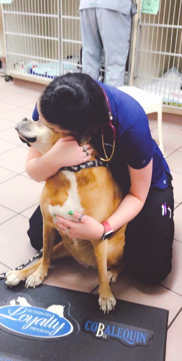 Dog goes to vets for hugs