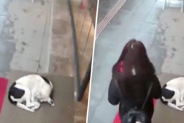 CCTV catches woman doing nice gesture to dog