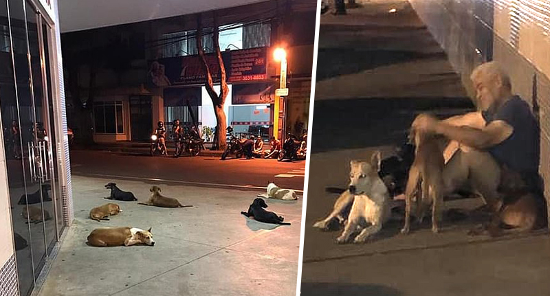 pictures of loyal dogs who waited outsdie the hospital for their homeless owner