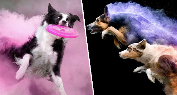 Photographer Throws Colourful Powder On Dogs And The Results