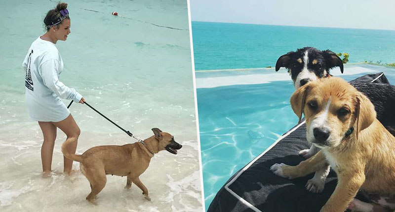 Holiday with dogs