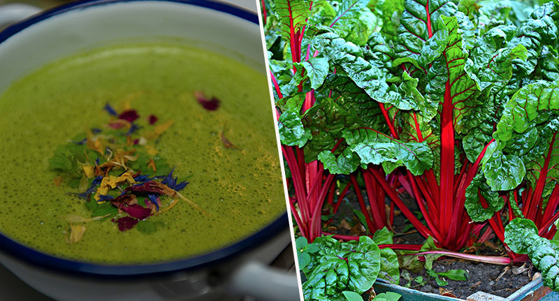 swiss chard and avocado soup
