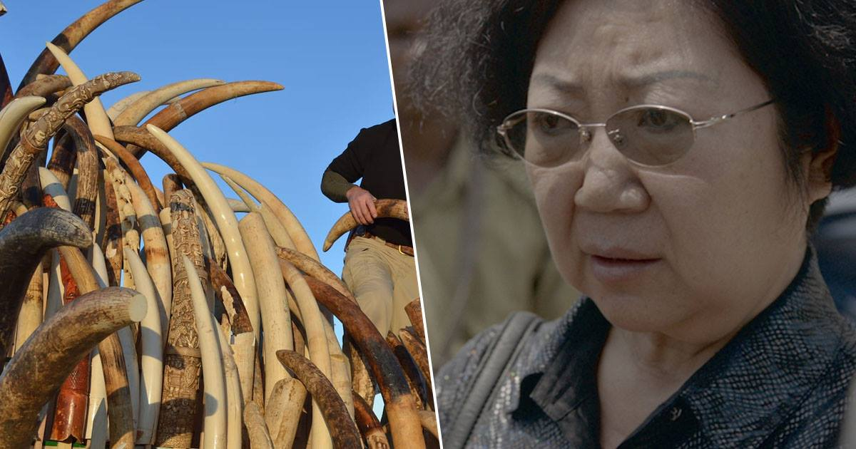'Ivory Trade Queen' Faces Death In Prison After Shipping More Than 400 Tusks From Africa To Asia