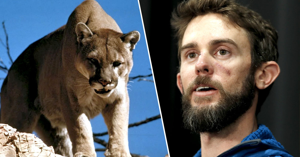 Man attacked by mountain lion