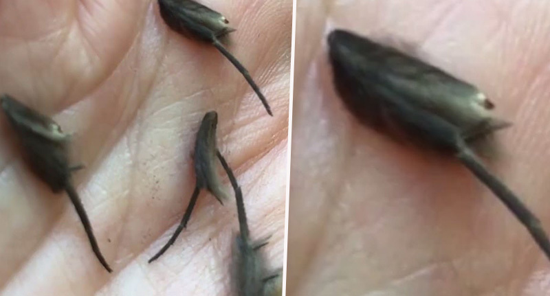 tim clerke found these creepy crawlies in his mum's kitchen