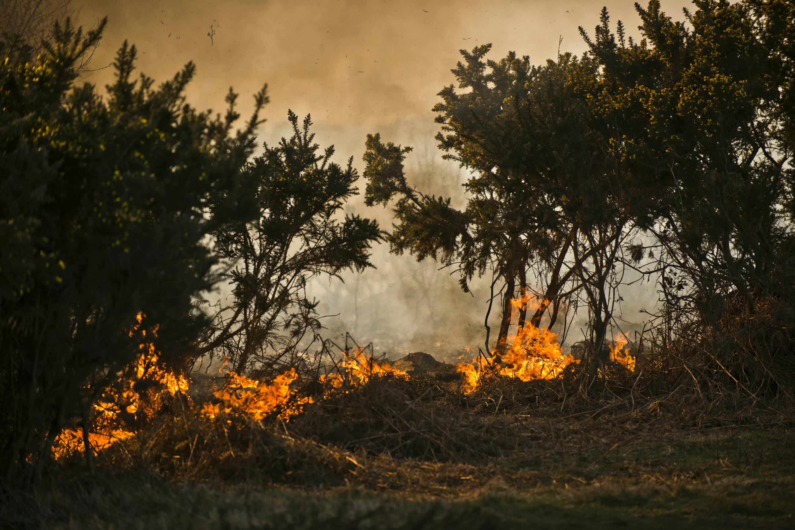 Wildfires east Sussex