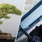 Couple Asking Thieves To Water Their Stolen 400-Year-Old Bonsai Tree