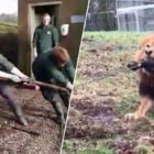 Zoo Lets Children Play Tug Of War With Lions And Tigers