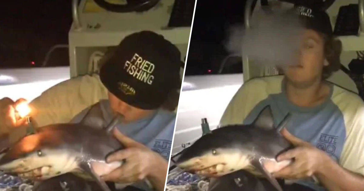 Man who made bong out of shark defends video