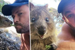 Chris Hemsworth feeds quokkas from his mouth
