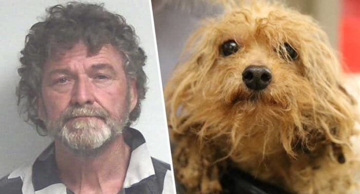 Breeder arrested for keeping dogs in terrible conditions.