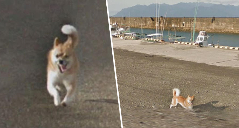Dog chases google street view car