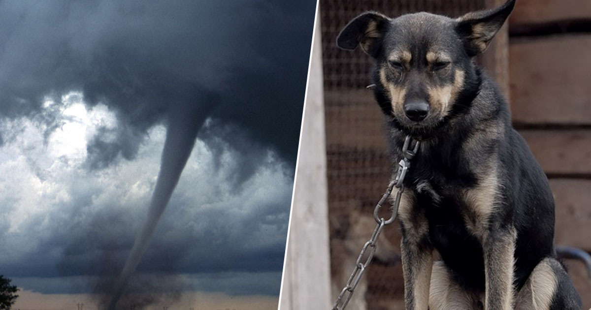 Abandoning dogs in natural disasters bill