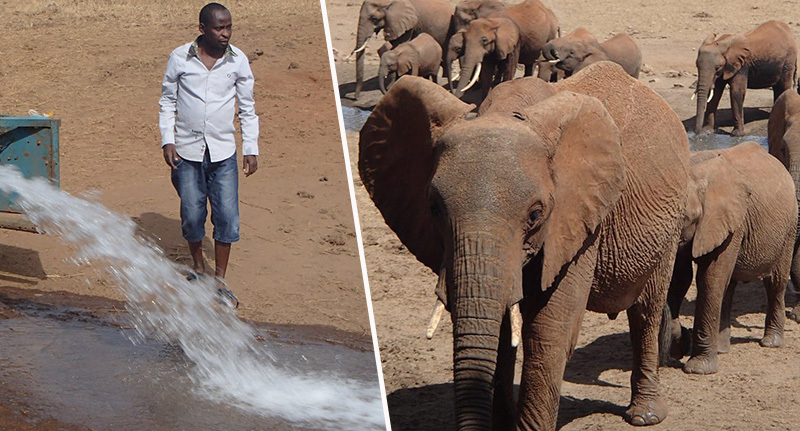 man feeds water to drought animals