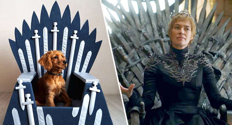iron pet thrones