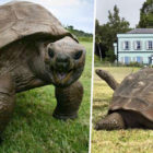 Jonathan Is The Oldest Living Animal In The World