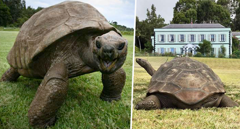 jonathan the oldest tortoise