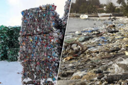 EU bans single use plastic