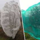 People Are Outraged Over 'Sickening' Reason For Nets Being Put On Trees