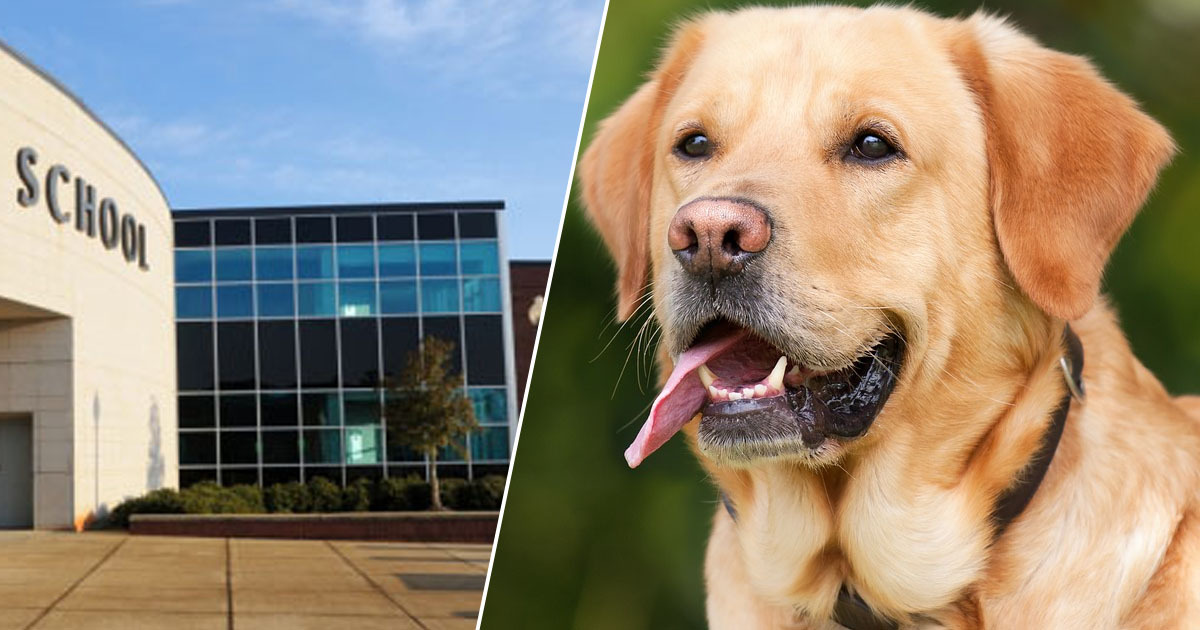 Well-being dogs can reduce anxiety in the classroom.
