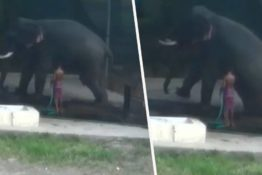 Elephant Crushes 'Carer' To Deat