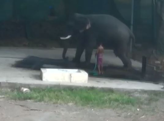 Man crushed to death by elephant