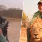Trophy Hunter Who Killed Sleeping Lion Identified