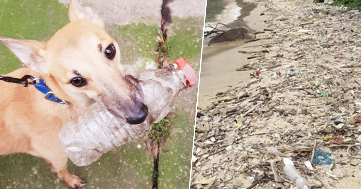 Dog gets involved in trashtag challenge
