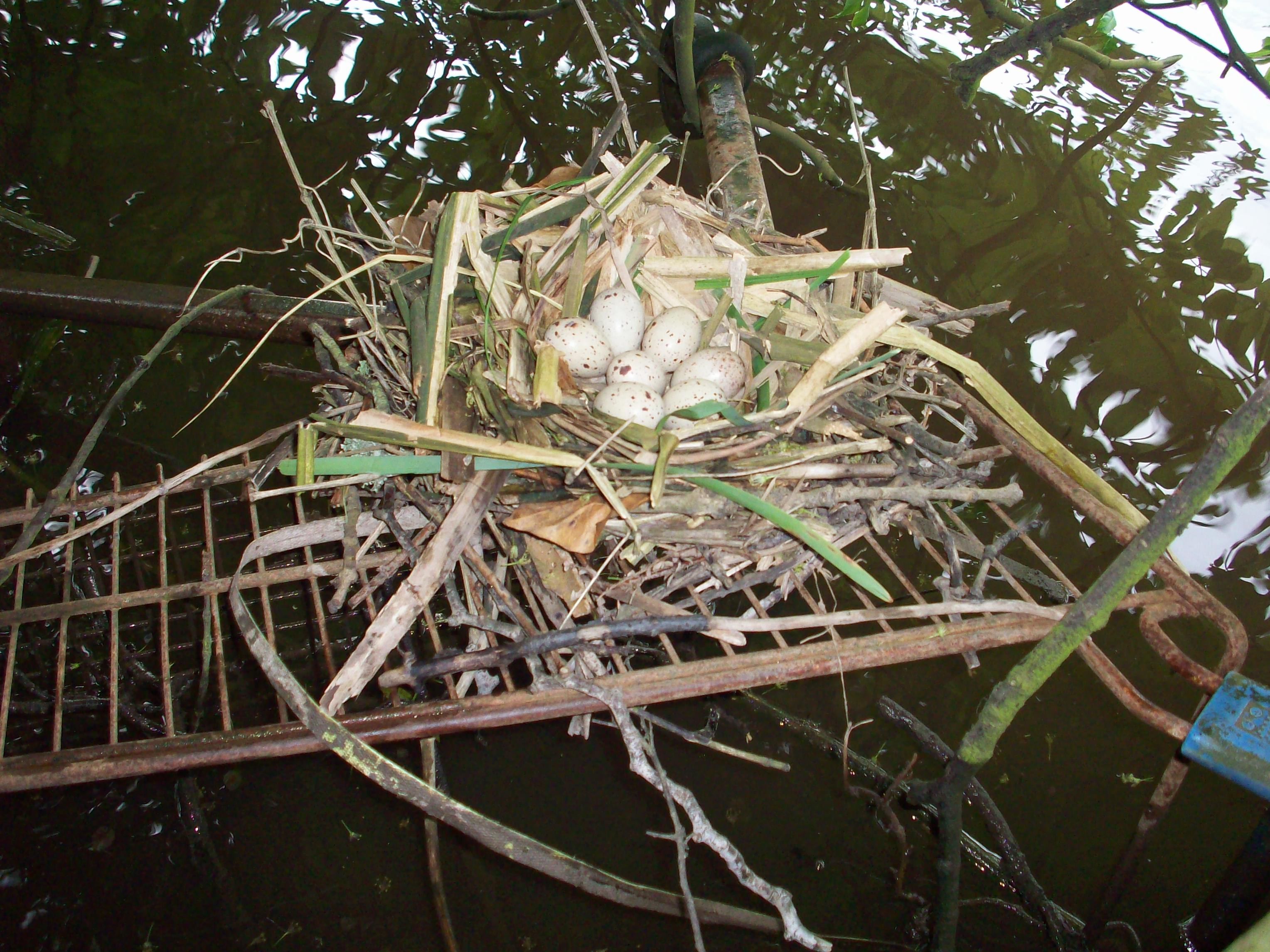Nest build on top of shopping trolley