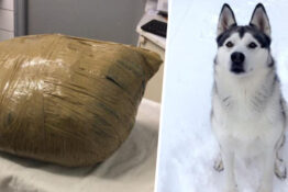 Kennels wraps dog in tape after it dies