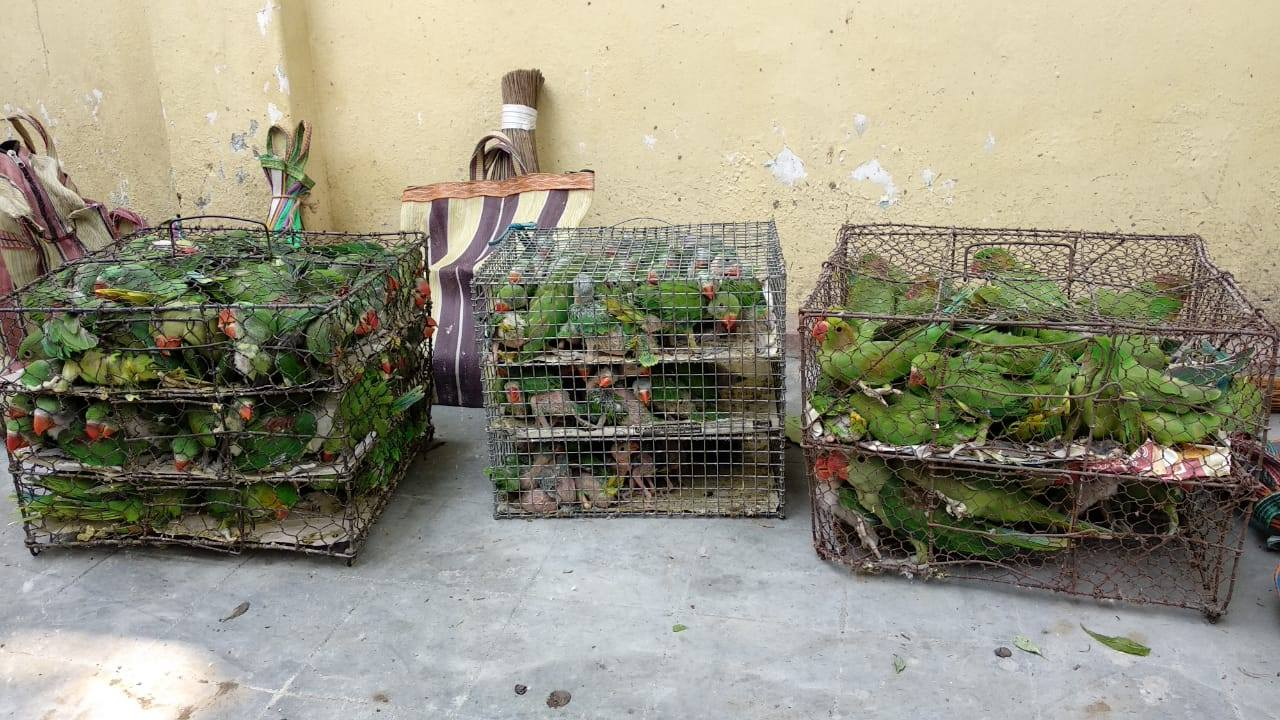rescued caged birds india