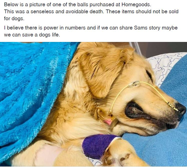 Dog tragically dies after swallowing toy