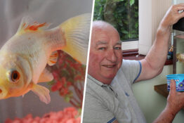 britain's oldest goldfish