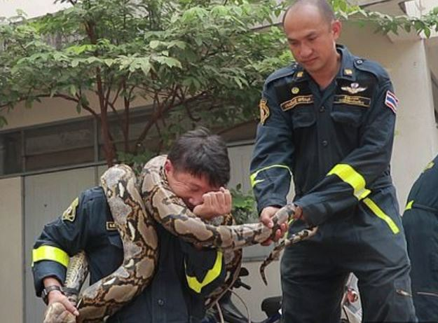 Fireman demonstrates how to survive python strangulation