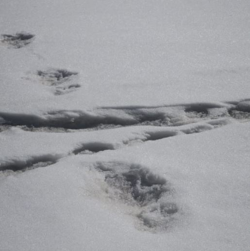 Indian army claim to find yeti footprints