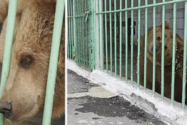 Katya The Bear Is Serving A Life Sentence In A Kazakhstan Prison With Dangerous Criminals