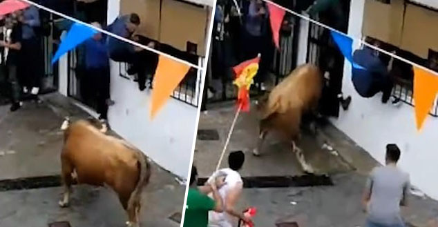 Spectator at bull running event in Spain gored to death by bull.