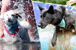 Dogs participate in Battersea obstacle course.
