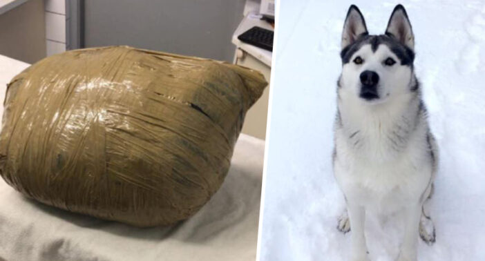 Dog left at Dublin boarding kennels dies and is wrapped in masking tape.