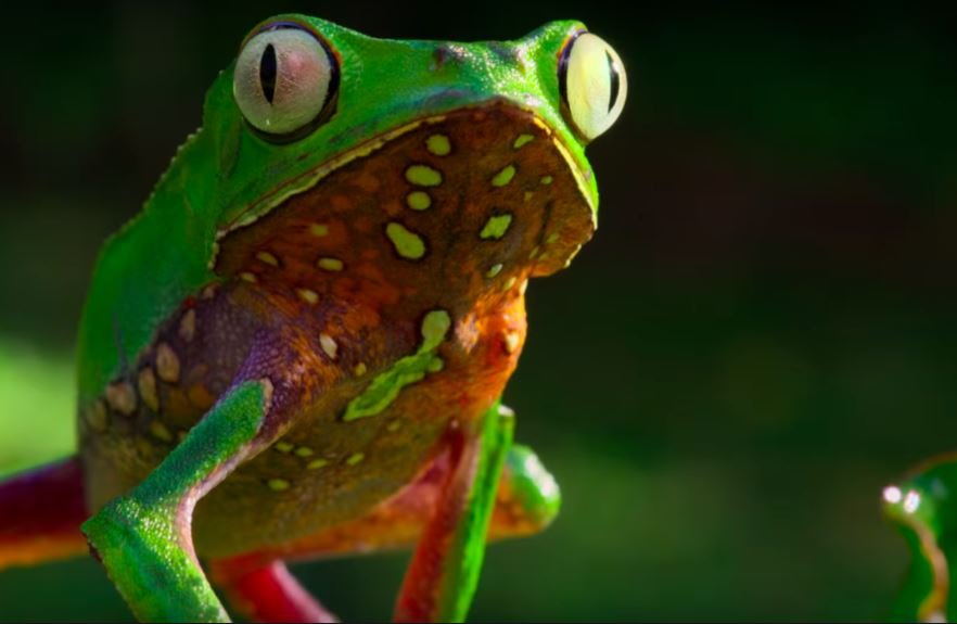 frog from our planet