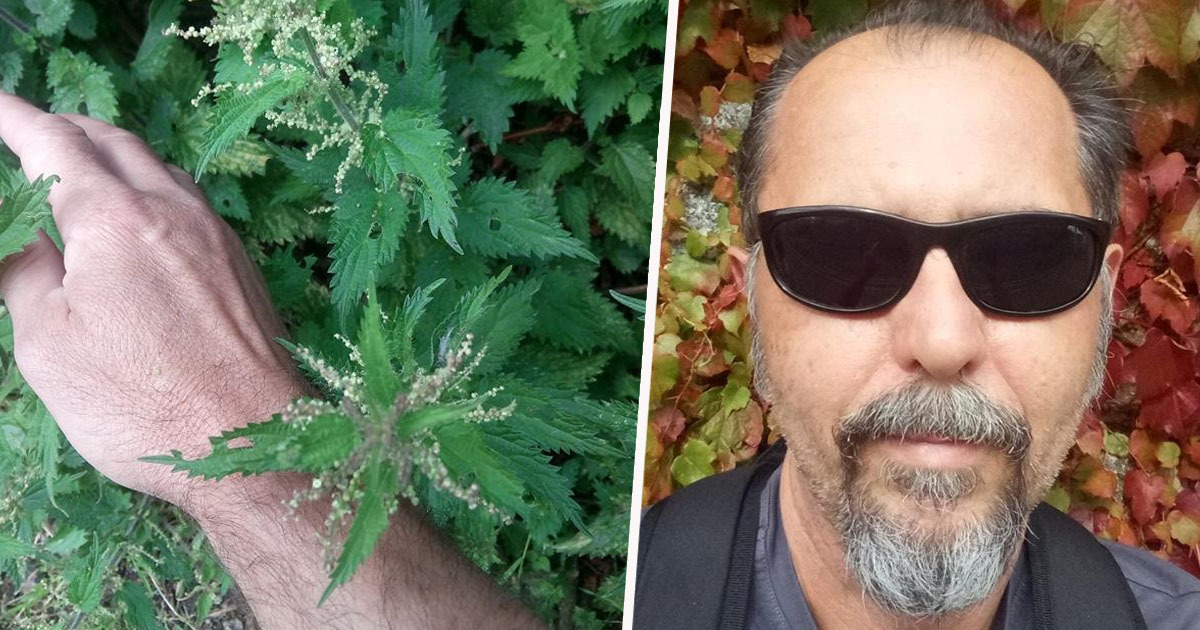 goran pavlovic claims to have cured his hay fever by stinging himself with nettles