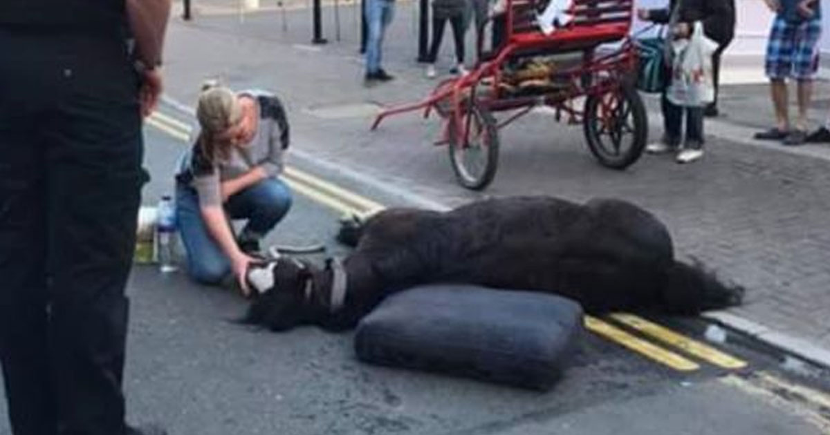 Two Arrested After Horse Collapses Being Forced To Work In Bank Holiday Heatwave